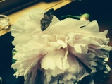 delicate peony with moth