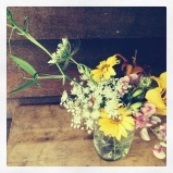 wildflowers in august