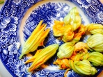 squash blossoms in june