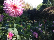 dahlia test garden