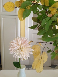 cafe au lait dahlia and september birch branches